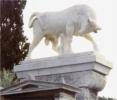 Simbolo del Toro - Dioniso